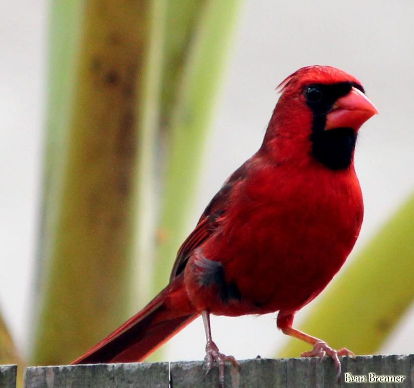 CardinalFence