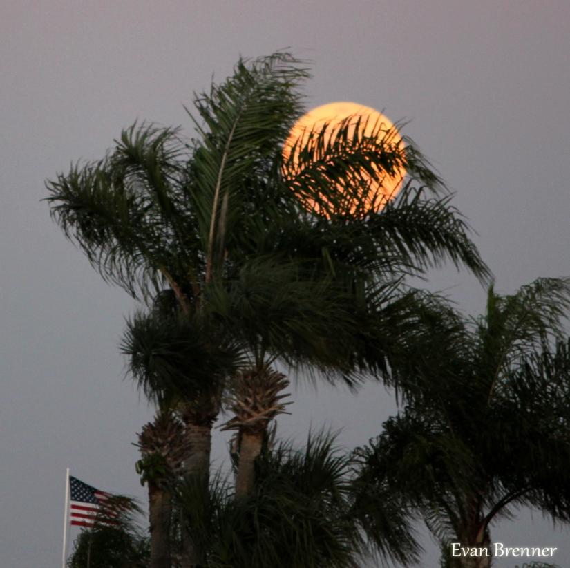Tropical moon